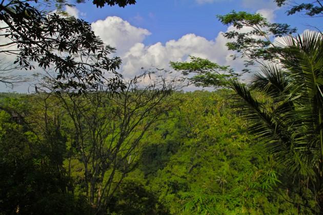Como-Shambhala-Estate-Ubud-Bali-Silencio-Hotels-Luxe-ayung-valley-view