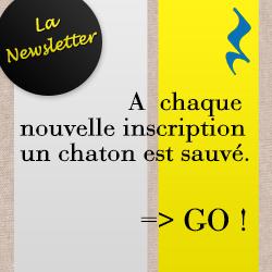 newsletter-250x250